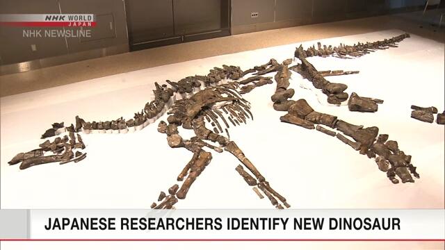জাপানে উদ্ধারকৃত বৃহত্তম ডাইনোসরের জীবাষ্ম কঙ্কাল