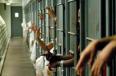 মালয়েশিয়ায় কারাবন্দী হাজার হাজার অভিবাসীদের শর্ত সাপেক্ষে বৈধকরণ পরিকল্পনা